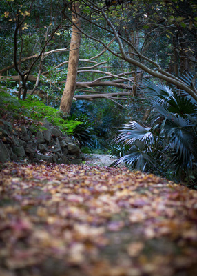 leaf covered pathway at the rhododendron gardens