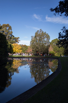 Rhododendron Gardens reflections
