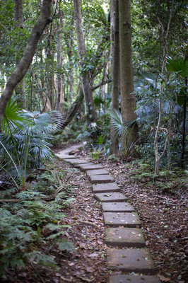 path way to the bush chapel Mt keira scout camp