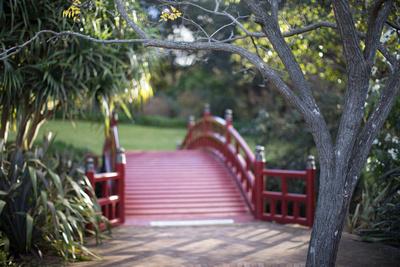 Japanese Bridge at the wollongong botanic gardens