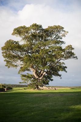 firtree at killalea