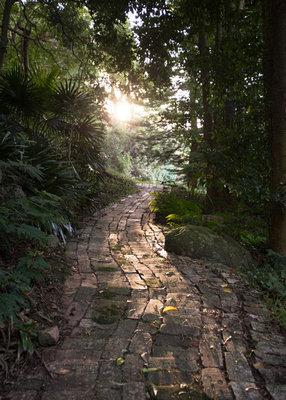 brick pathway at the rhododendron gardens