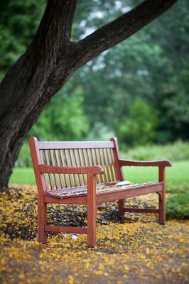 park bench wollongong botanic gardens